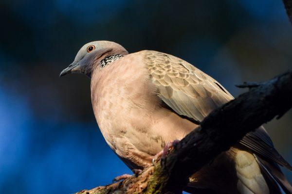 CAROLE-BIRD-PHOTOS1