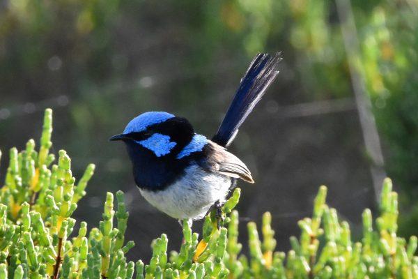 CAROLE-BIRD-PHOTOS101