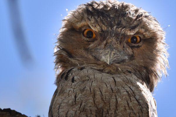 CAROLE-BIRD-PHOTOS102