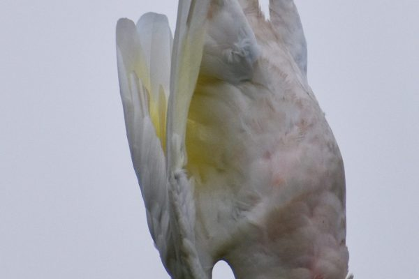 CAROLE-BIRD-PHOTOS103
