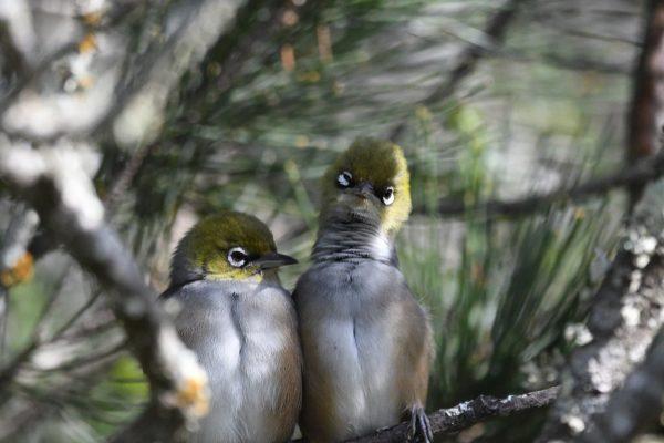 CAROLE-BIRD-PHOTOS105