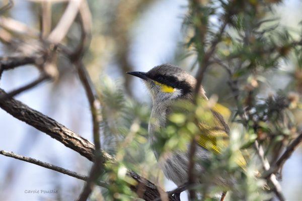 CAROLE-BIRD-PHOTOS106