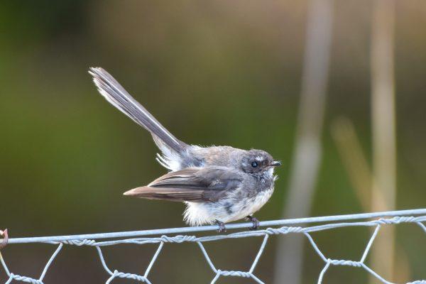 CAROLE-BIRD-PHOTOS107