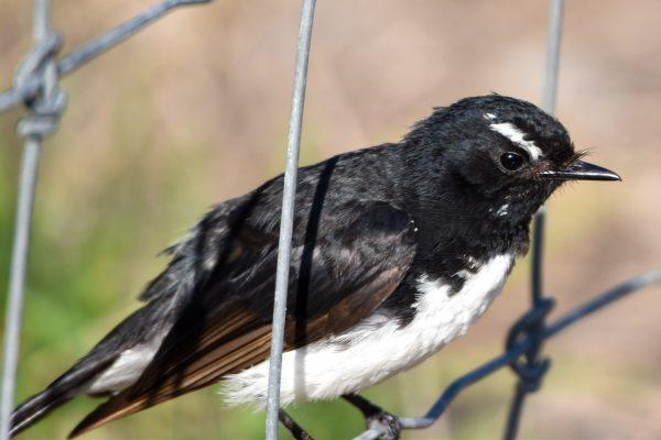 CAROLE-BIRD-PHOTOS11