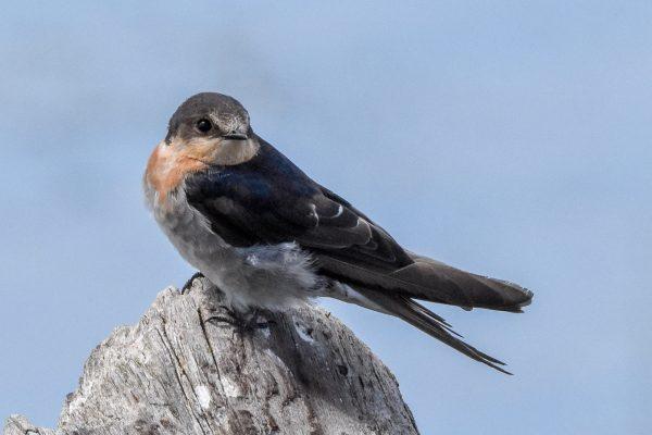 CAROLE-BIRD-PHOTOS111