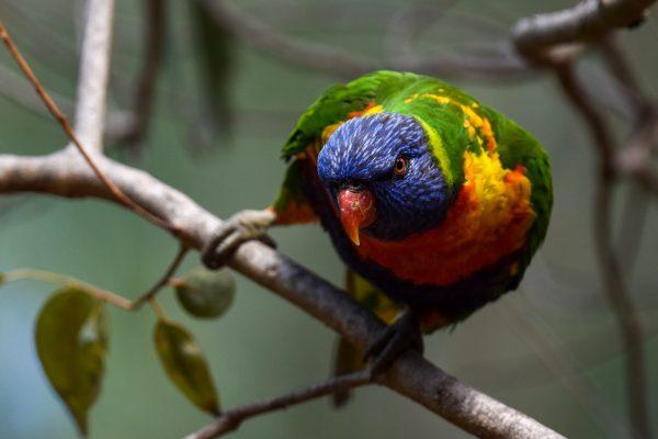 CAROLE-BIRD-PHOTOS112