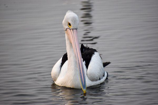 CAROLE-BIRD-PHOTOS113