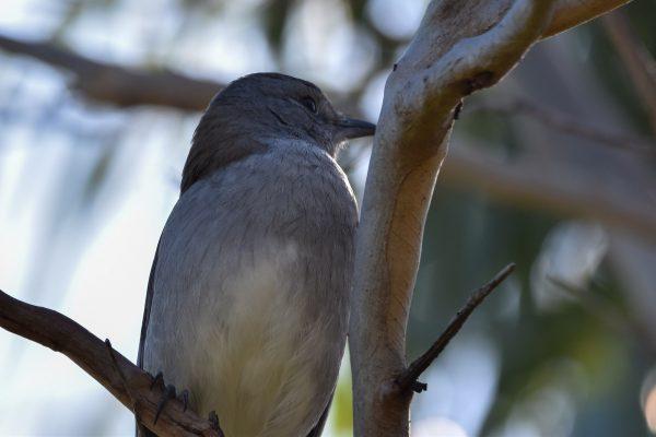 CAROLE-BIRD-PHOTOS114