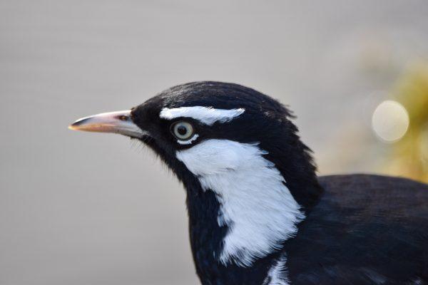 CAROLE-BIRD-PHOTOS115