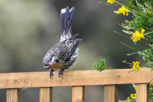 CAROLE-BIRD-PHOTOS116