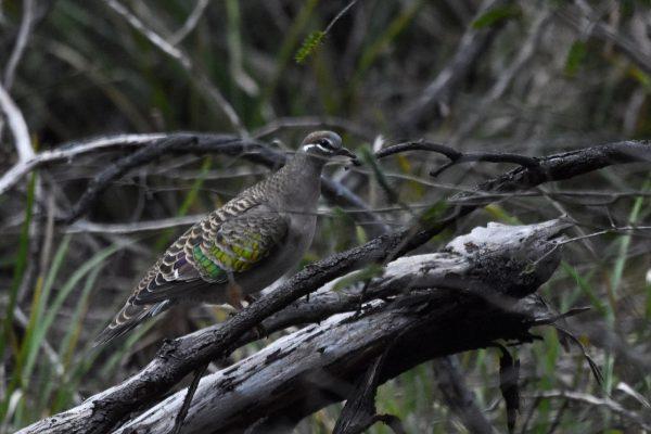 CAROLE-BIRD-PHOTOS119