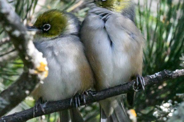 CAROLE-BIRD-PHOTOS12
