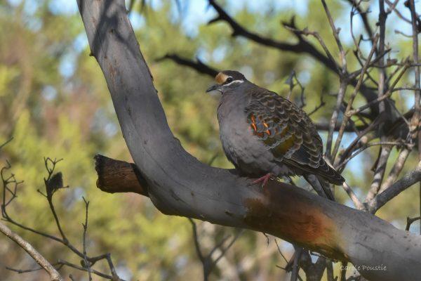 CAROLE-BIRD-PHOTOS120