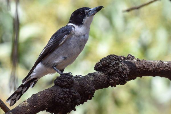 CAROLE-BIRD-PHOTOS121