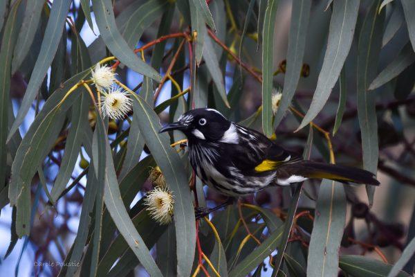 CAROLE-BIRD-PHOTOS123