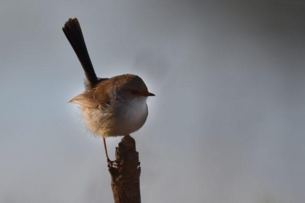 CAROLE-BIRD-PHOTOS125