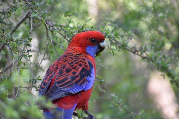 CAROLE-BIRD-PHOTOS126