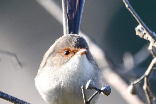 CAROLE-BIRD-PHOTOS128