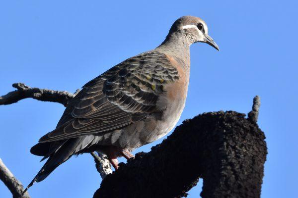 CAROLE-BIRD-PHOTOS13