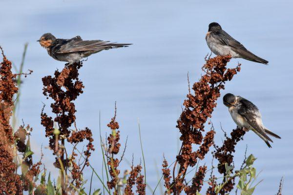 CAROLE-BIRD-PHOTOS130