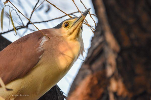 CAROLE-BIRD-PHOTOS131