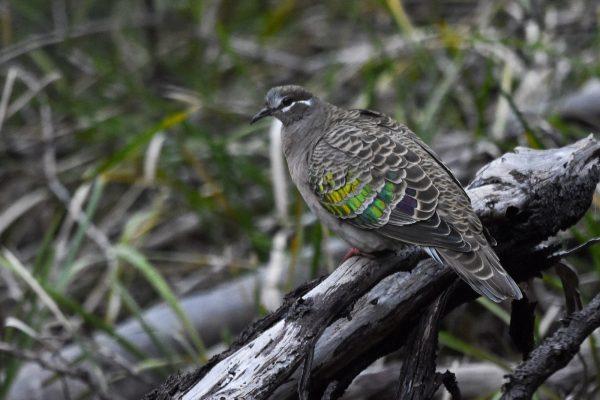 CAROLE-BIRD-PHOTOS134