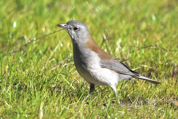 CAROLE-BIRD-PHOTOS136