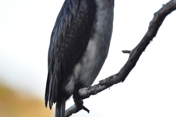 CAROLE-BIRD-PHOTOS138