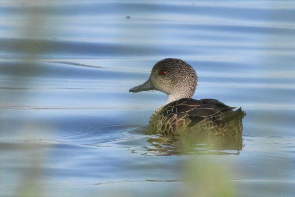 CAROLE-BIRD-PHOTOS140