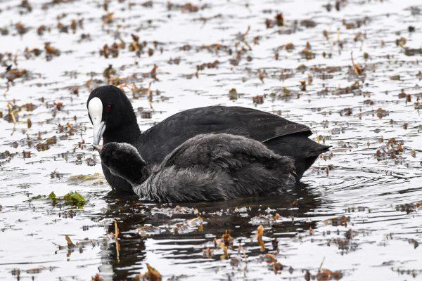 CAROLE-BIRD-PHOTOS141