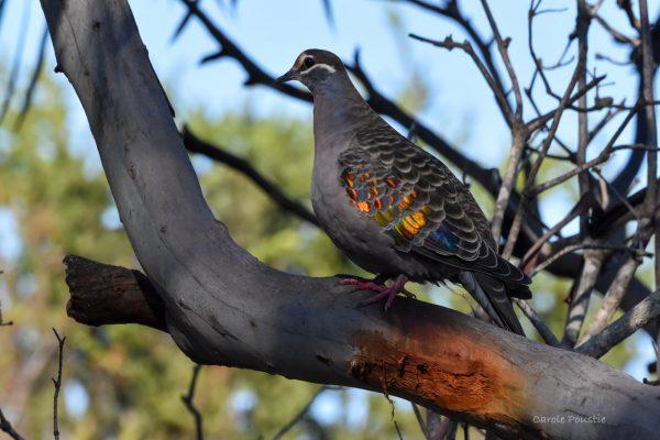 CAROLE-BIRD-PHOTOS142