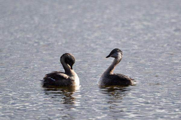 CAROLE-BIRD-PHOTOS145