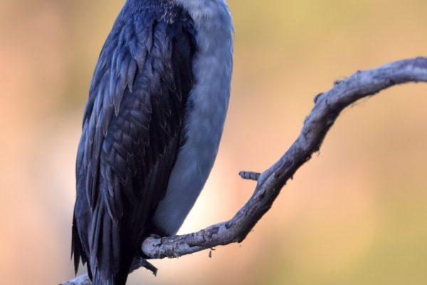 CAROLE-BIRD-PHOTOS147