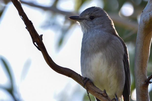 CAROLE-BIRD-PHOTOS148