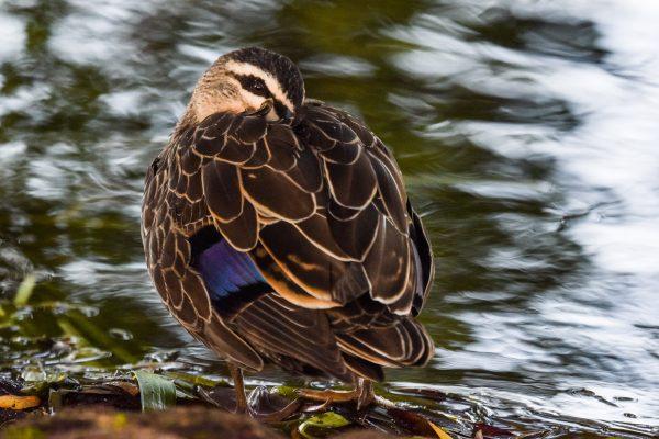 CAROLE-BIRD-PHOTOS149