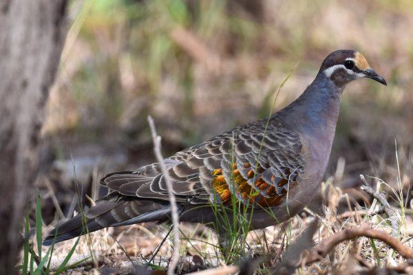 CAROLE-BIRD-PHOTOS150