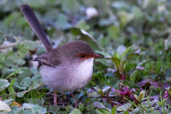 CAROLE-BIRD-PHOTOS151