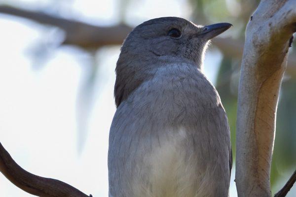 CAROLE-BIRD-PHOTOS152