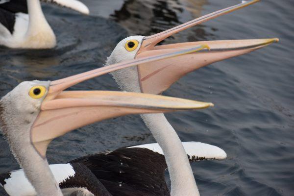 CAROLE-BIRD-PHOTOS154