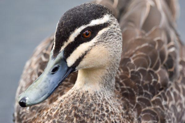 CAROLE-BIRD-PHOTOS156