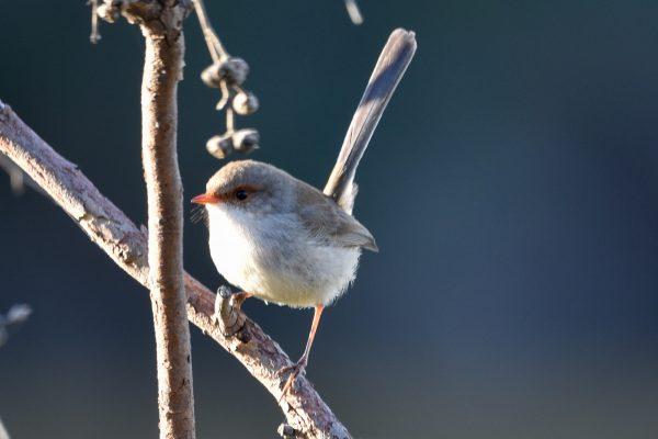 CAROLE-BIRD-PHOTOS157