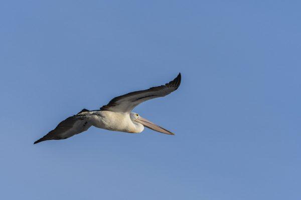 CAROLE-BIRD-PHOTOS158