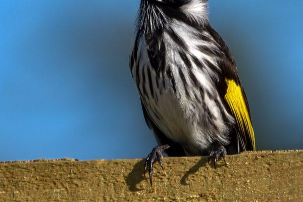 CAROLE-BIRD-PHOTOS159