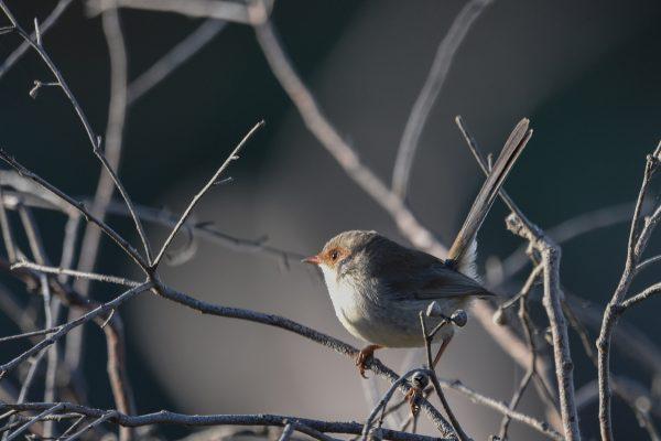 CAROLE-BIRD-PHOTOS16