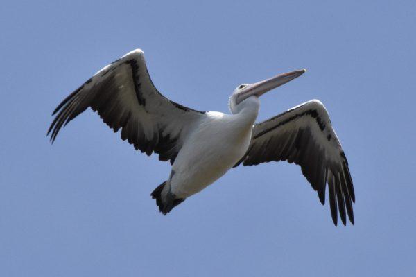 CAROLE-BIRD-PHOTOS161