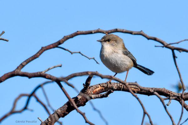CAROLE-BIRD-PHOTOS165