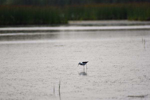 CAROLE-BIRD-PHOTOS166