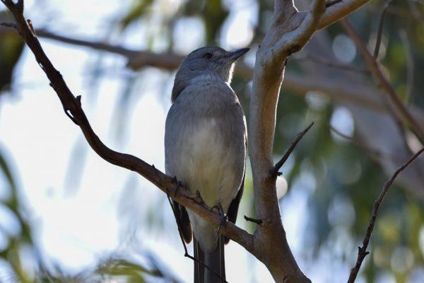 CAROLE-BIRD-PHOTOS167
