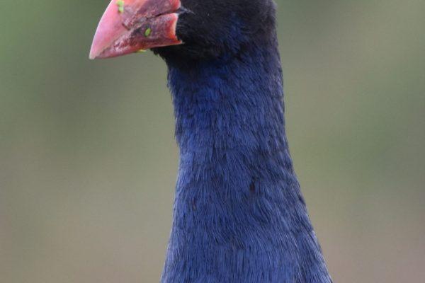 CAROLE-BIRD-PHOTOS170