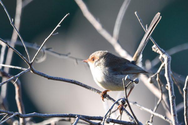 CAROLE-BIRD-PHOTOS171